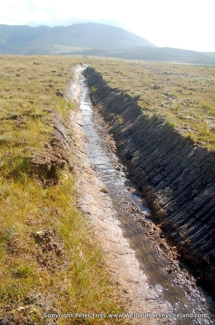 drainage of bogs